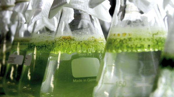 Química e Derivados, Biocidas - Liberadores de formol