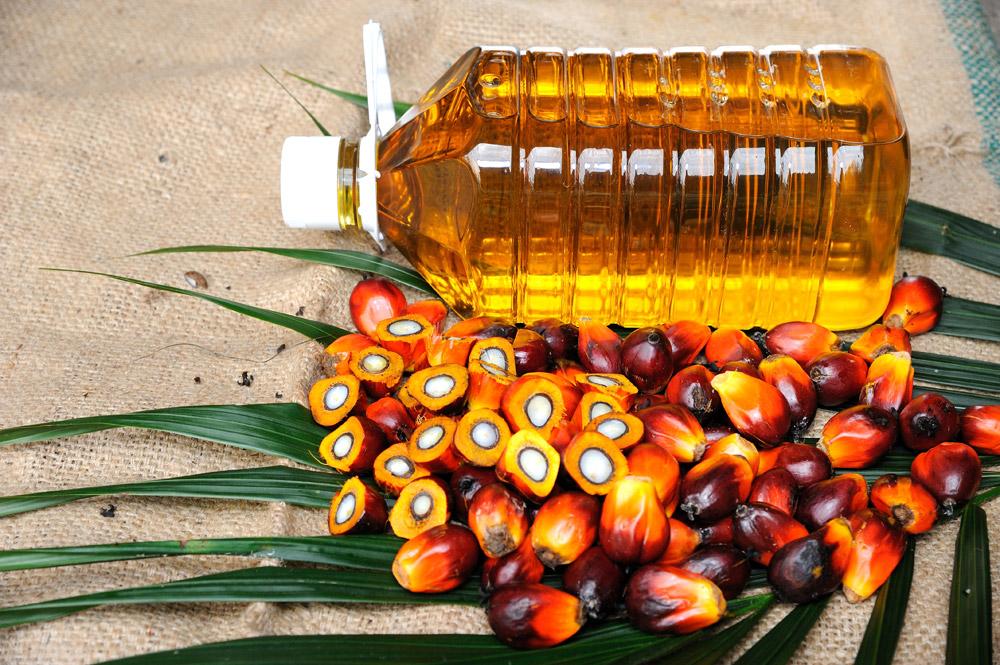 Química e Derivados, Incentivos oficiais podem garantir suprimento futuro dos óleos de palma e palmiste